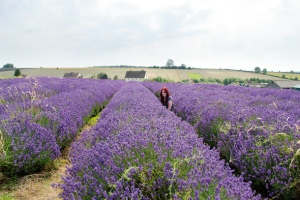 How_to_take_sharp_photos_NIK11.zone_1.lavender01a